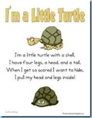 420 best turtles tortoises images on pinterest sea turtles