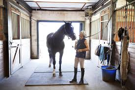 horse care 101 resources for the basics