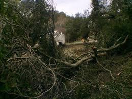 orinda fallen tree closes miner road east bay times