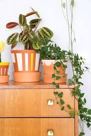 pots for indoor plants indoor plant and pot pack 2 x pots and 2 x