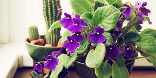 10 worst common houseplants for allergies allergy u0026 air