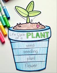 plants life cycle craft part of a full plants unit plan for k 1