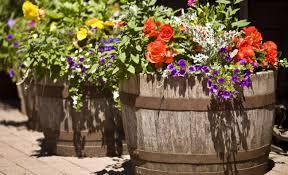 plant large flower planters amiable large flower pots images