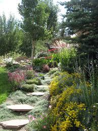 Rock Garden Perennials by Edwards Perennial Plants Colorado Alpines U0026 Wildflower Farm