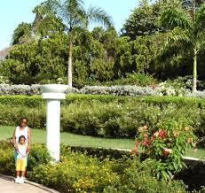 Botanical Gardens Images by Hope Botanical Garden And Zoo Jamaica Caribbean Top Tips