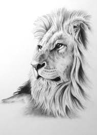 the 25 best lion art ideas on pinterest lion drawing lion face