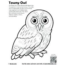 bird coloring pages for toddlers barn coloring page barn owl coloring page screech owl coloring pages