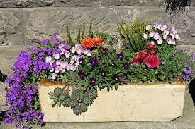 flower gardening for beginners a guide to growing your dream garden