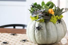 How To Make A Succulent Planter by Succulent Pumpkin Planter Inspired By Charm