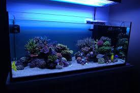 Aquascape Inspiration Rimless 120g Tsvbi Dream Build Page 4 Reef Central Online