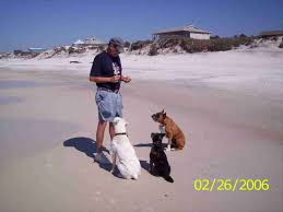 cape san blas dog friendly rentals on dogs and beaches