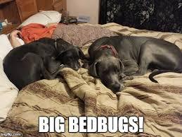 Dog In Bed Meme - dog in bed imgflip