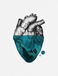 image result for drawings anatomical heart anatomical