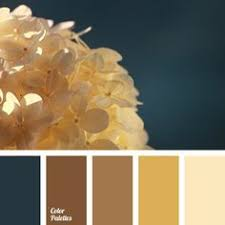 beige color selection color solution dark green and deep blue