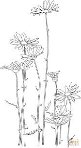 oxeye daisy coloring page free printable coloring pages