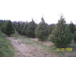 welcome to crossen christmas tree farm for fresh cut trees and wreaths