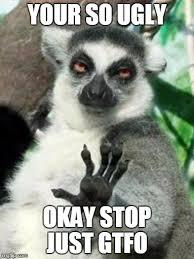Lemur Meme - whoa lemur memes imgflip