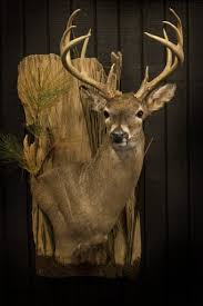 Deer Pedestal Deer Mounts Vanderpol Taxidermy