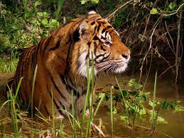 wildlife wikipedia