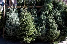 christmas tree on sale where to find christmas trees for sale in shreveport bossier