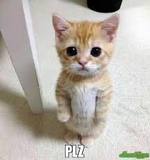 Plz Meme - plz meme kitten timesheet 78559 memeshappen
