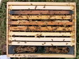 plan bee wiggledanceforme