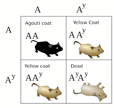 lethal allele wikipedia