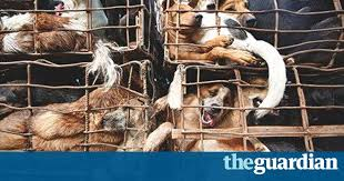 Burying Your Dog In The Backyard Legality How Eating Dog Became Big Business In Vietnam World News The