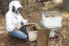 becoming a beekeeper in western australia agriculture and food