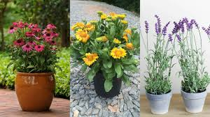 10 drought tolerant plants that will survive all summer long part