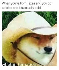 Texas Meme - when you re from texas and you go outside and it s actually cold