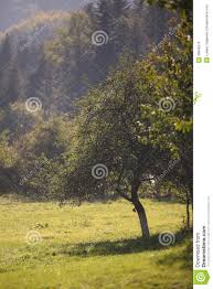forest glade royalty free stock image image 28648276