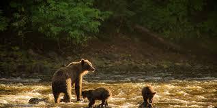 Alaska Travel Meaning images Bear viewing on admiralty island near juneau alaska travel juneau jpg