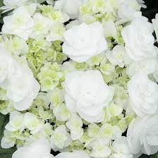 hydrangea wedding guide for wedding gown hydrangea