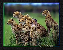 Halloween Cheetah Costumes Cheetah Costume U2026 Pinteres U2026