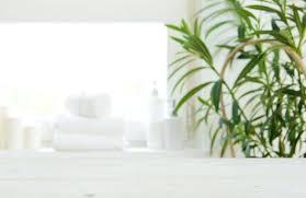biggest house plants shower plants shower design