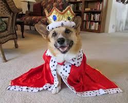 Pet Halloween Costumes Dogs Royal King Corgi Dog Halloween Costume Dog Halloween Costumes