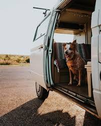 Pet Ready Exterior Doors by Travel Inspiration 1 Salt In Our Hair Travel Blog
