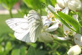 butterflies u2013 hortographical