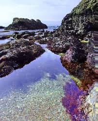 glass beach glass picture of glass beach fort bragg tripadvisor