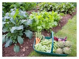 i4 vegetable gardening ideas on apartment