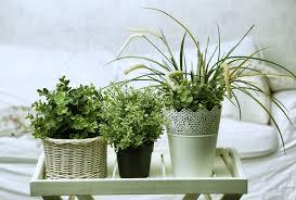 miniature gardening 102 indoor vs outdoor plants the mini an