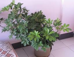 plants for cleaner indoor air worldnews