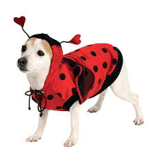 ladybug costume ladybug costume for dogs costume craze