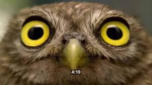 Owl Memes - 4 20 dank meme owl edition youtube
