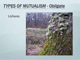 relationship in nature activities of man powerpoint
