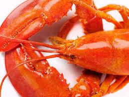 cuisiner un homard comment cuisiner le homard sytyson