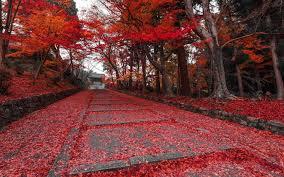 imagenes de otoño para fondo de escritorio fondos otoño wallpapers autumn fondos de pantalla de otoño