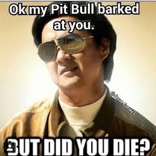 U Win Meme - but did you die bullys pinterest pit bull fur babies and