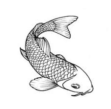 coy fish drawing best images collections hd for gadget windows
